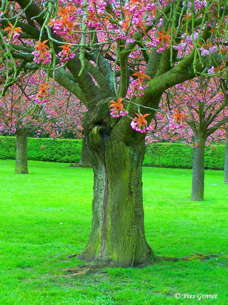 Ceinture verte de paris parc jardin floral botanique rema for Jardin botanique paris