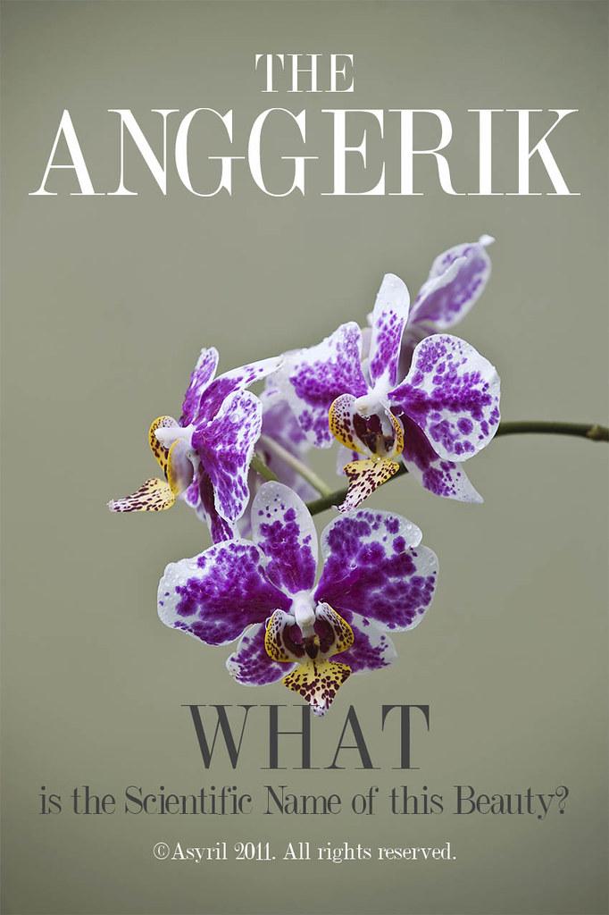 """Anggerik图片""的图片搜索结果"