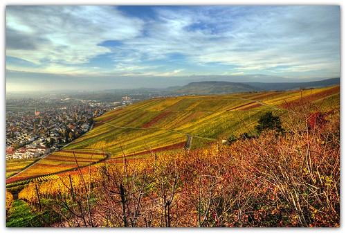 Autumn Vineyard | by Habub3