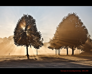 250/365 Sunrays on a sundaymorning | by Maarten Takens