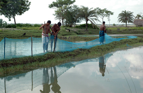 Fencing a pond, Bangladesh. Photo by WorldFish, 2008