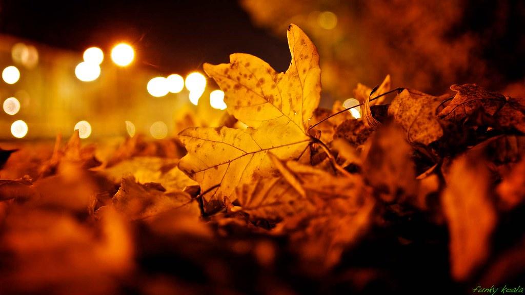 november leaves website www bonfert photography de