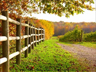 You can't fence in autumn | by kuddlyteddybear2004