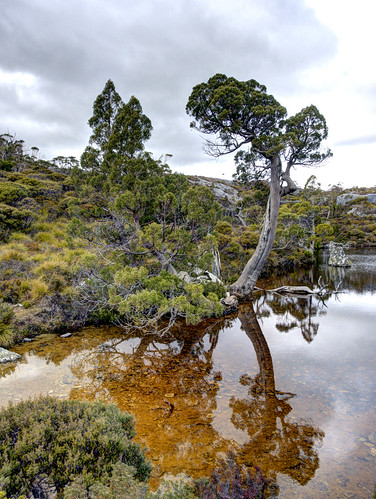 wombat pool | by *dmf*