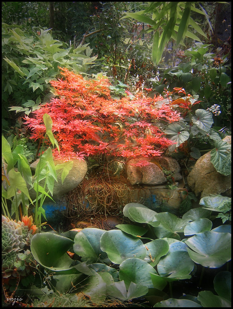 Zen garden view of the koi pond in my garden with flame for My garden 3d