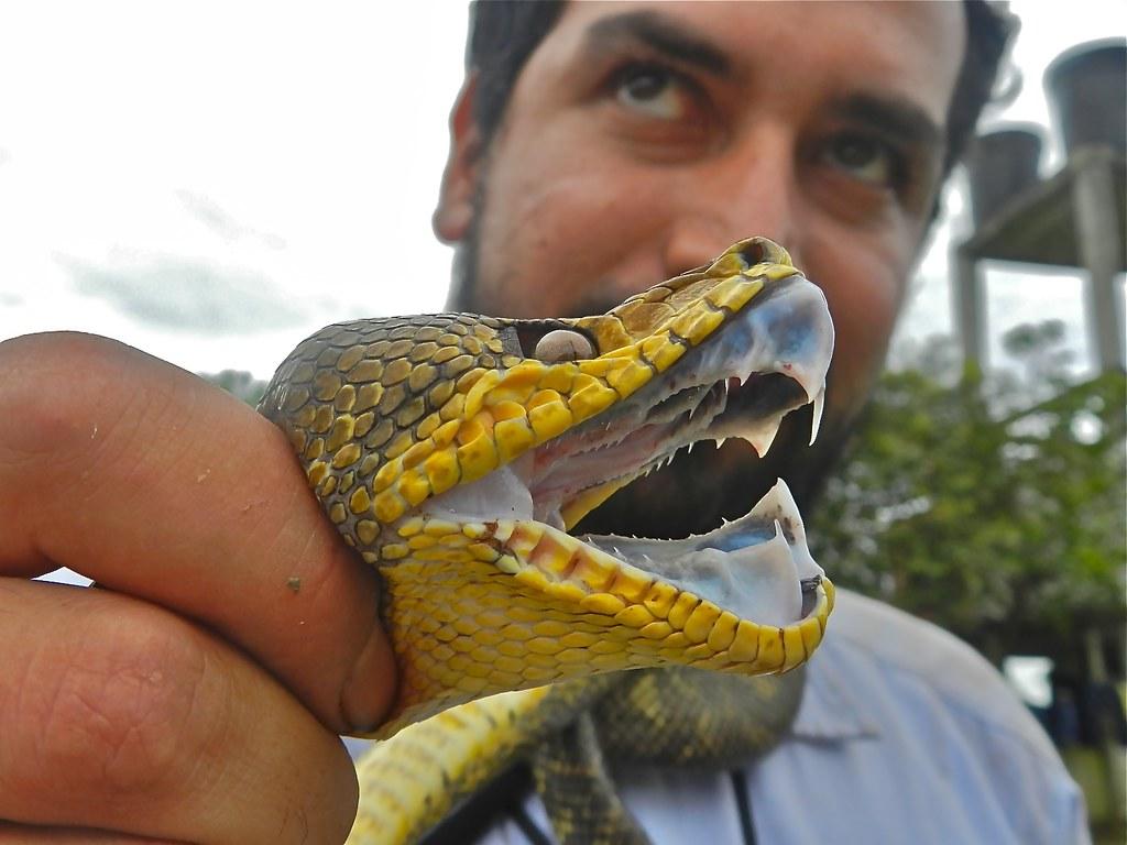 macabrel dientes foto elizabeth navarro Álvaro velásquez macabrel dientes by mr culebra