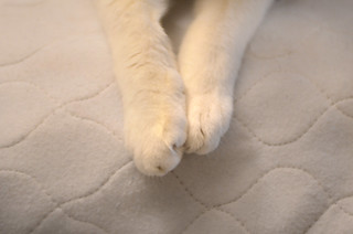 Kittycat Paws | by hpaich