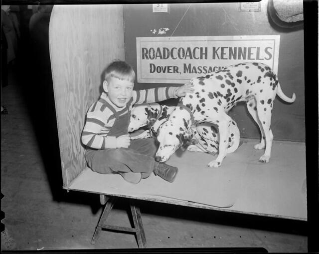 Dog Kennels Dover Kent