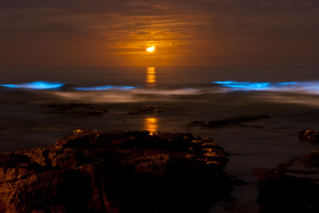 Red tide at night, red tide at night. Wo oh, wo oh oh oh o ...