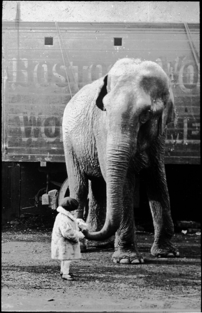 elephant and girl this image comes from a collection of gl flickr