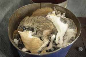 Shelter Dead Pile Cats A Rare Breed Of Love Flickr