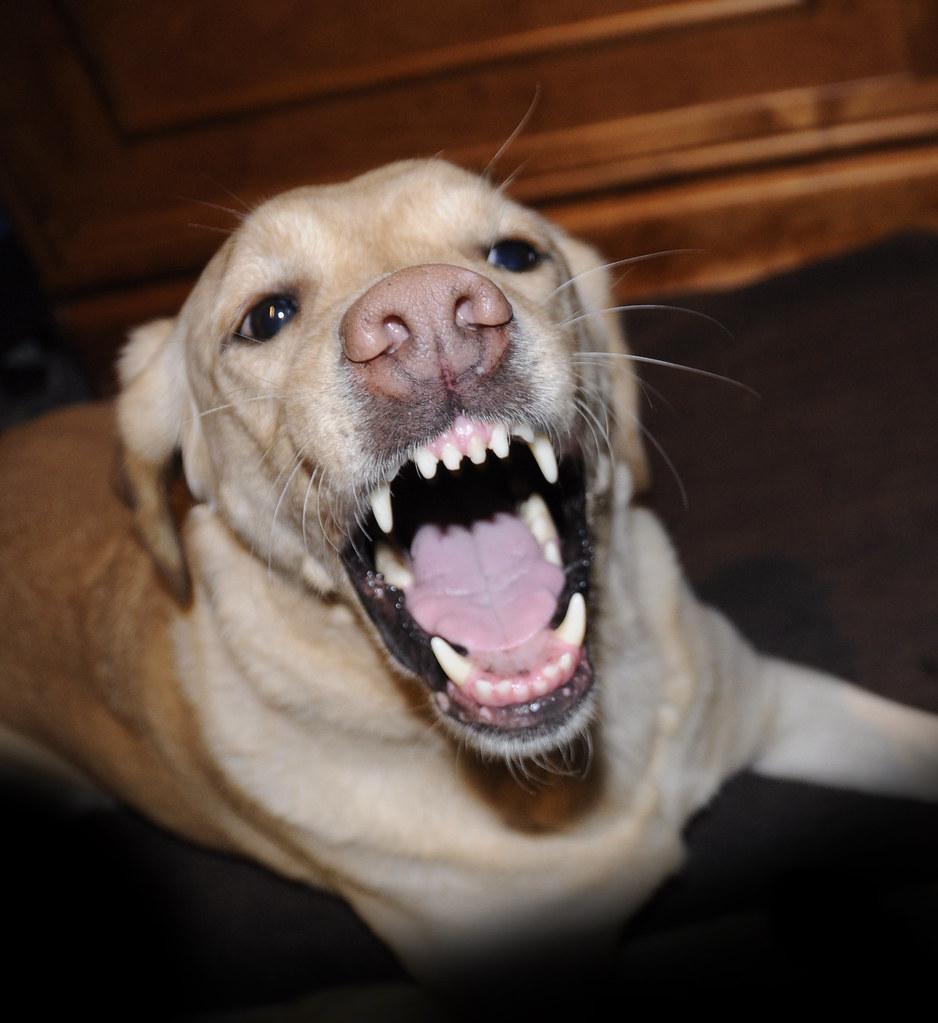 Dog Bites Me When I Pet Him