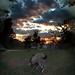 Sunset surreal goat