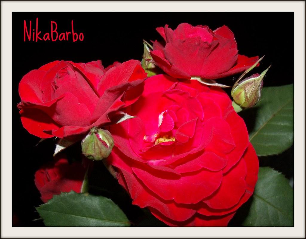Para A Minha Amiga Do Coração Regina Parabéns Amiga F Flickr