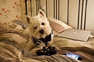 Xbox Dog | by feirny