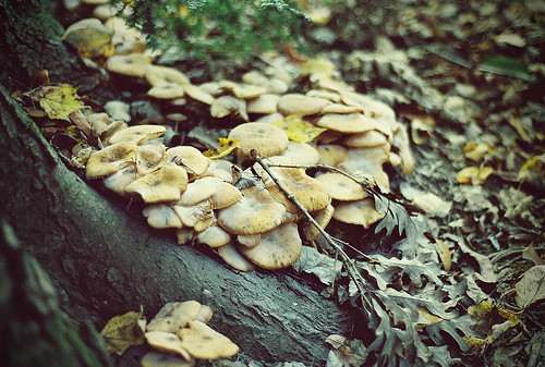 fungi | by oohvelocitygirl