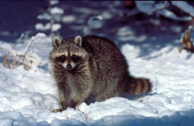 .: 20 Fakta Unik Hibernasi Mamalia :.