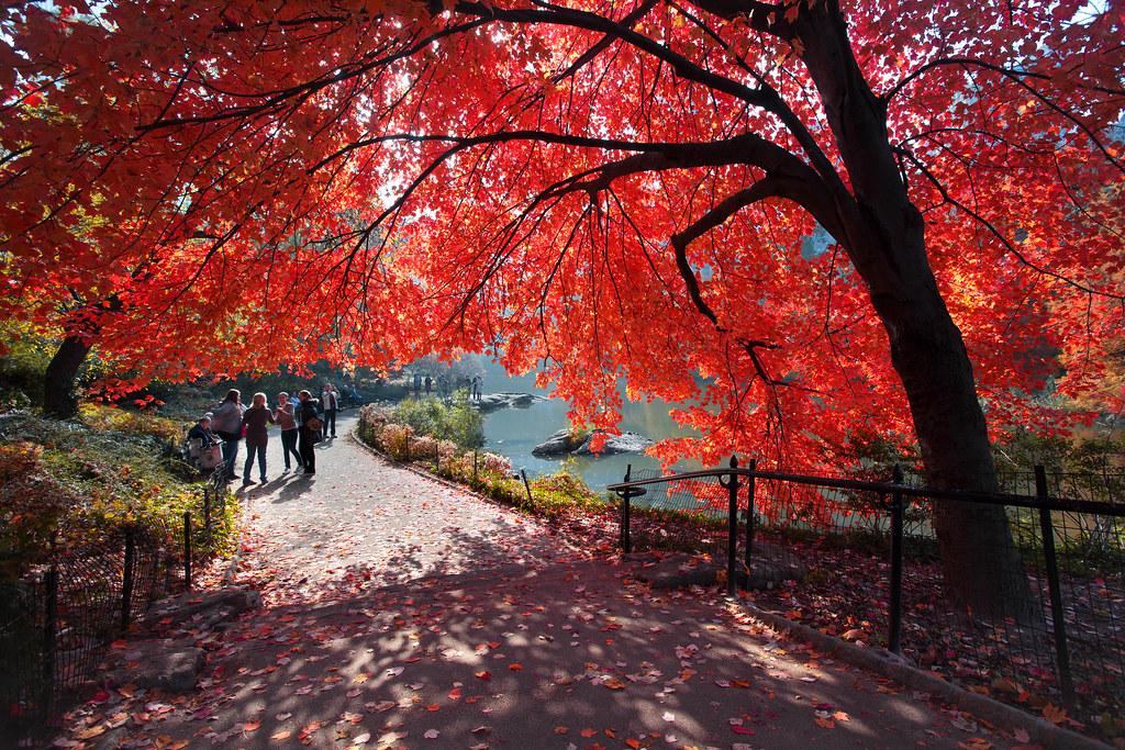 'Cherry Umbrella', United States, New York, New York City ...