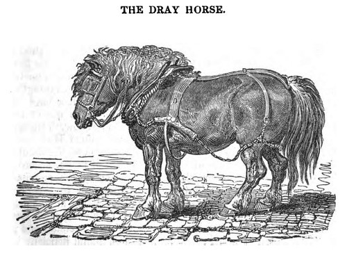 dray horse 1831 illustration from the horse with a tre flickr. Black Bedroom Furniture Sets. Home Design Ideas
