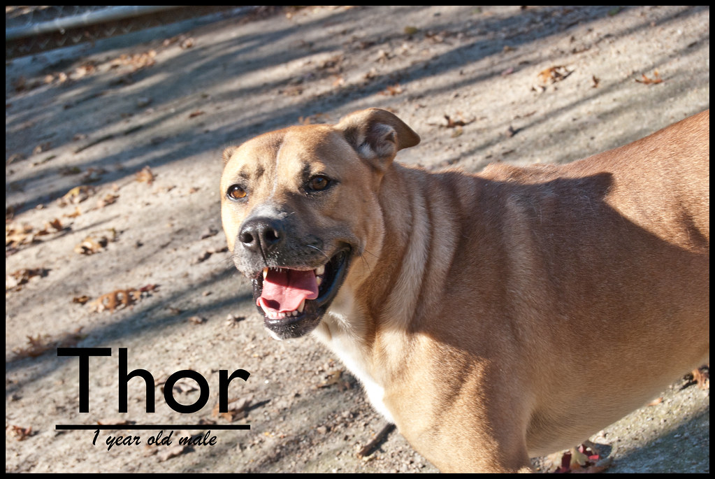 The Animal Rescue League Of Southern Rhode Island