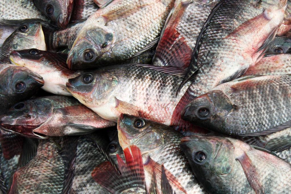 Fish On The Market Of Kentung Myanmar Burma Sensaos