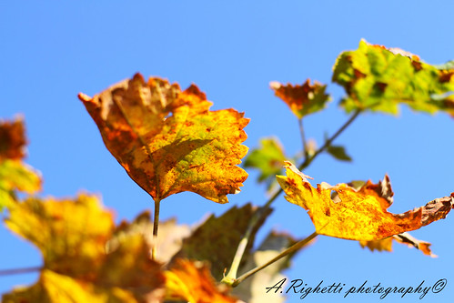 autumn is coming | by righet
