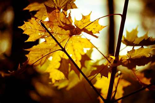 Yellow Autumn 2/3 | by Pierre Pocs