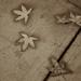 Tuolumne Leaves