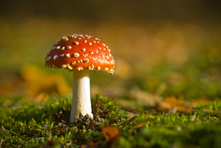 Fly Agaric | by Machinisto