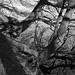 110312-precarious-trees