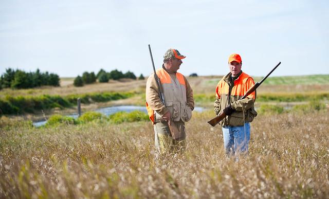 Pheasant Hunting South Island Nz