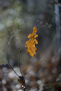 Glimpses of fall | by Lightspectral