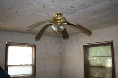 Flood Mold on Ceiling Fan