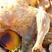 Roasted chicken & jerusalem artichokes / Ahjukana maapirnidega