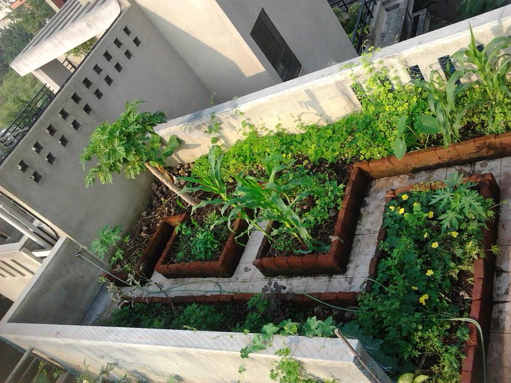 2011 10 15 08 siddartha sikdar flickr for Terrace farming diagram