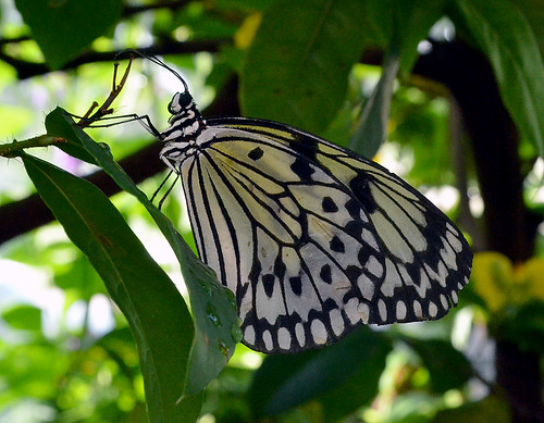 Museum Of Natural Science Butterfly Exhibit