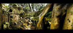 Templo Ta Prohm, Angkor, Camboya. Árbol Kapok.