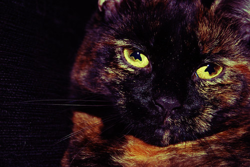 My Cats Eyes. | by Joshua Ormston Photography