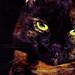 My Cats Eyes.