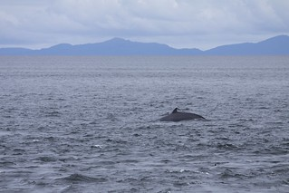 A minke whale, at Neist Point | by Frank-01