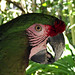 Parrot Ardastra Gardens