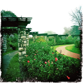 Rose Garden At Loose Park This Morning Was Foggy And Way