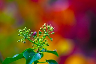 Berries and bokeh | by Steve-h