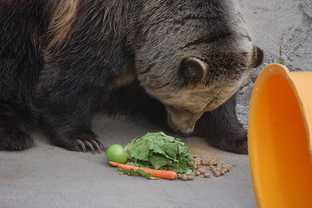 Food Grizzly Bears Eat