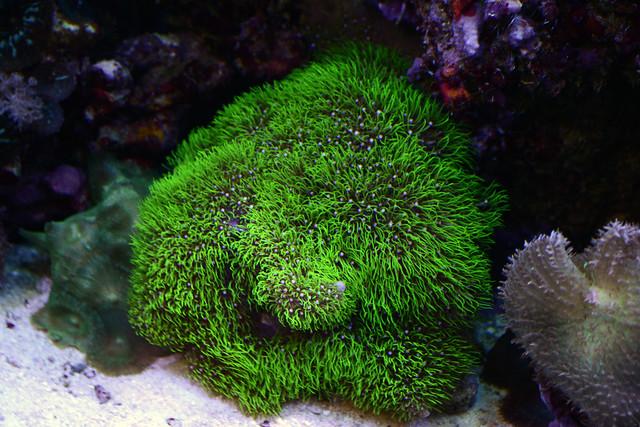 Les coraux faciles 6285834353_892b060509_z