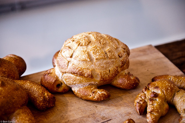 Bread Turtle | Flickr - Photo Sharing!