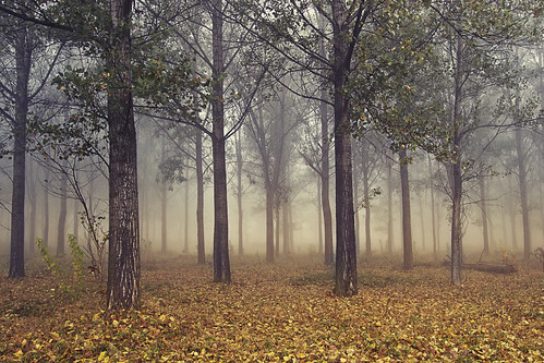 A forest, in autumn | by Greta Spinoni