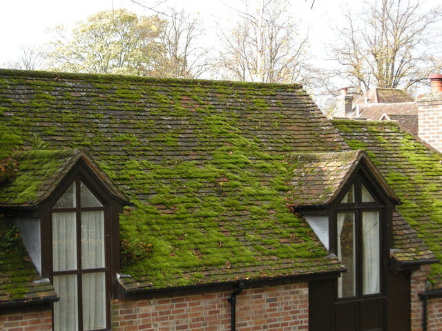 Moss Covered Roof Flickr Photo Sharing