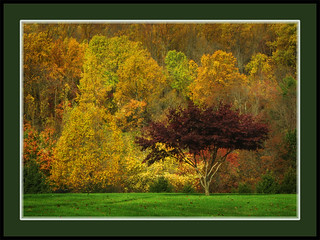 Autumn Leaves In Chester County PA | by dcsaint