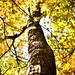 Autumn Tree [Explore #13]